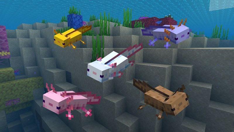 cómo atrapar ajolotes en Minecraft